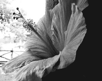 Jamaican Hibiscus Flower