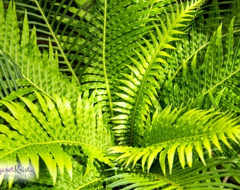 Rain Forest Fern - Green tropical Hawaii exotic plant photography