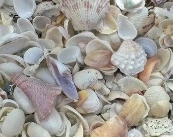 Sea Shells, Beach Nature Note Cards Photography,Beach Note cards Beach Decor, Wall Art ,Brigantine Island NJ. Note cards,4 for 12.00