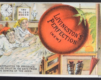 Rice's Seeds Trade Card for Livingston's Perfection Tomatoes Victorian Trade Card 1880s Advertising