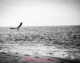 Black and a White Seagull in Cape May, NJ