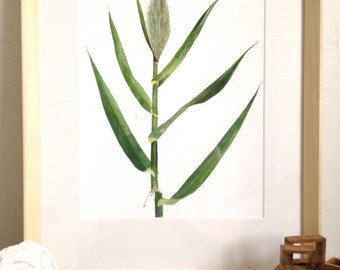 Arundo Reed-- Los Angeles River in Atwater (Watercolor Art Print)