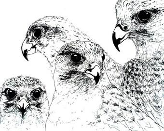 Birds. Good quality art print. A3 size.
