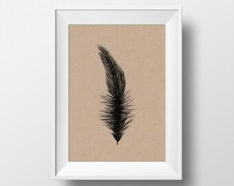 Feather Single Illustration