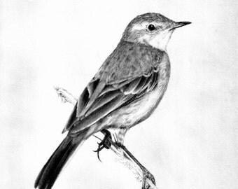 Little bird portrait by evgeniyfill82, 11 x 8 inch, graphite on the paper