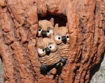 Screech Owl Tree Home