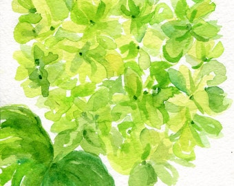 Hydrangeas watercolors paintings original, 5 x 7, Lime Green flower art, hydrangea painting, hydrangea watercolors SharonFosterArt floral