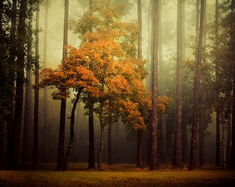 Enchanted Forest Photography, Fairytale Photography, Autumn Landscape Decor, Fairy Tale Photography, Fall, Woods, Trees, Warm Tones, Fog