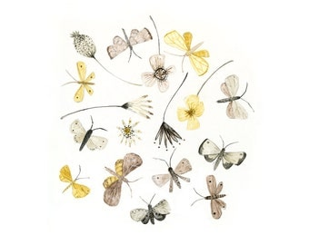 Moths and Flowers - archival art print