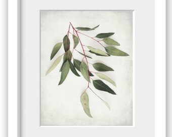 "Botanical nature photography neutral print minimal modern botanical plant print sage green gray wall art ""Eucalyptus Sprig One"""