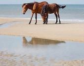 Horse Photography, Wild Horses Photo, Ocean, Beach Decor, Spanish Mustangs, Summer Art Print  - Better Together