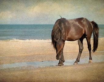 Horse Photography, Wild Horse, Mustang, Horse Art Print, Stallion, Equine Art, Beach, Summer, Teal, Brown, Beach Cottage Decor - Noble