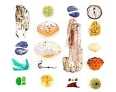 Beachcombing series No.34 - 11 x 14 photograph - birch bark, crab, shell, mussel, sea glass, seaglass, sea urchin, seaweed