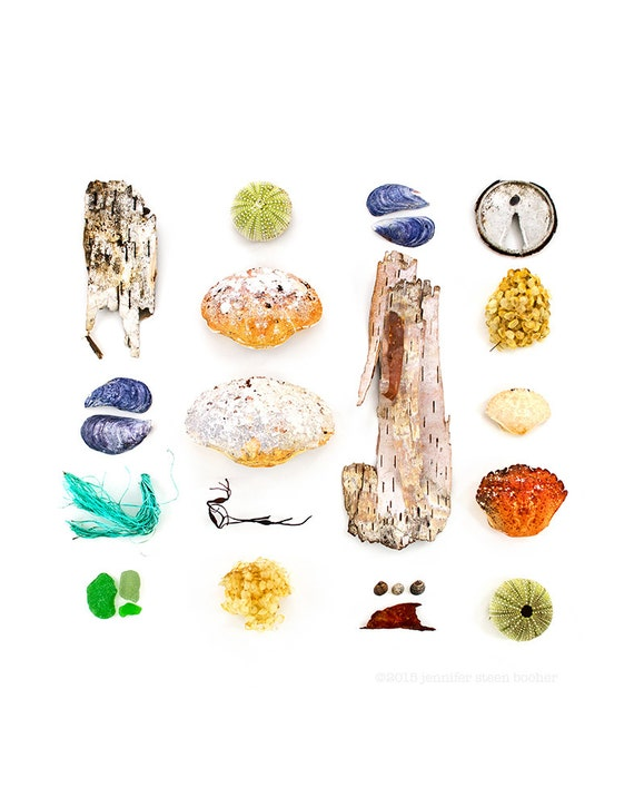 Beachcombing series No.34 - 8 x 8 photograph - birch bark, crab, shell, mussel, sea glass, seaglass, sea urchin, seaweed