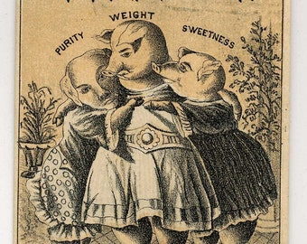 Victorian Trade Cad - Three Dressed Female Pigs - Lard Advertising - Late 1800's