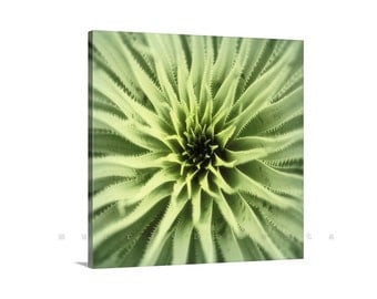 Agave Abstract Print, Desert Agave, Botanical Art, Photo on Canvas, Nature Photography, Green Art, Canvas Print, Sotol, Ready to Hang