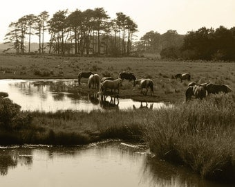 Horse Photography Chincoteague Ponies Assateague Island Sepia Print
