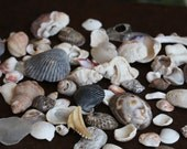 Mixed imperfect shells, small collection