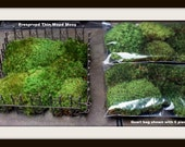 REAL Moss-Mood moss preserved-Flat Moss Preserved-No water needed-Floral moss-Thin moss-Quart bag with 6 pieces