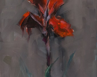 Rich Red Canna Lily on Moody Brown Background, Original Oil Painting by Clair Hartmann