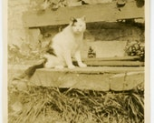 "1920s ""Spotty"" the CAT Sitting on Rustic Bench - snapshot 627-A"