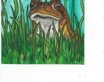 Old Man Frog - 2
