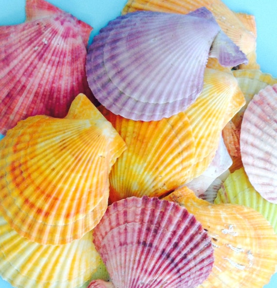 colorful seashells