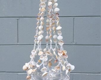 Spectral bittersweet seashell plant hanger
