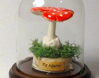 MUSHROOM - Museum Replica Quality in Display Cloche (Single Fly Agaric)