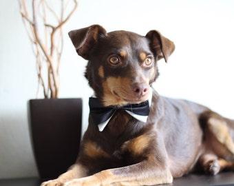 Deluxe Wedding Tuxedo Dog COLLAR - White shirt collar and bowtie with LEASH HOOK, wedding dog collar, dog wedding collar, dog tuxedo collar