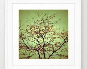 Tree Photography - Nature photograph - Abstract Art - Sage Green -Burnt Orange - Modern photo - wall Print - home decor