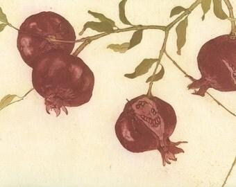 Pomegranate Branch, Original Fine Art Botanical Etching