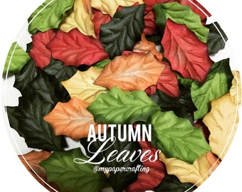 Mixed autumn Leaves / pack
