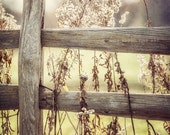 Rustic Decor, Golden Country Landscape, Fence Print or Canvas Wrap, Art for Living Room, Yellow Photography, Yellow Wall Art, Farmhouse.