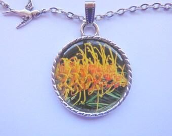 Grevilliea Sandra Gordon Native Australian Flora a Pendant