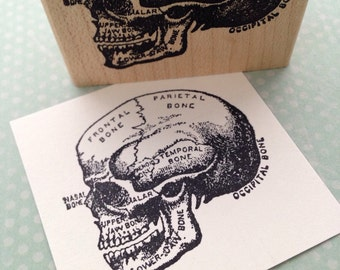Labeled Skull Wood Mounted Rubber Stamp 5023