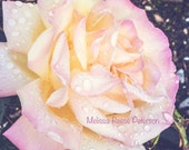 Pink Rose, Flowers, Nature, Photography Print, 8x10 + More Sizes, Petals, Raindrops, Dewdrops, Floral Home Decor, Garden, Norway