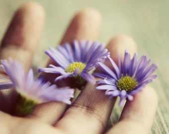 purple flower, hand photograph, rustic art, flower photography, asters, spring decor, botanical art,country decor,bedroom art,fine art print