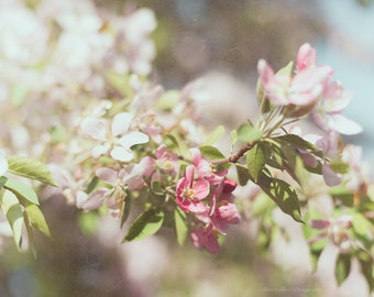 Spring Blossoms, Pink, Pastels, Floral, Nature, Cottage Chic, Home Decor, Fine Art Photography, 11x14