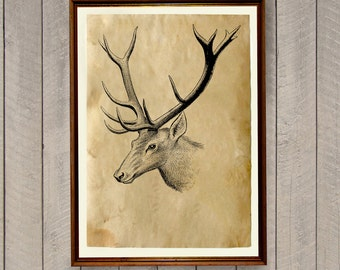 Deer print Rustic home decor Animal art poster AK687
