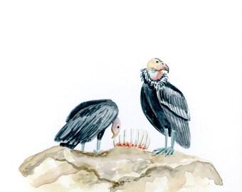 California Condors Bird Art Print