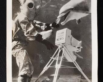 Rare Original Vintage Underwater Photograph Feeding the Dolphins