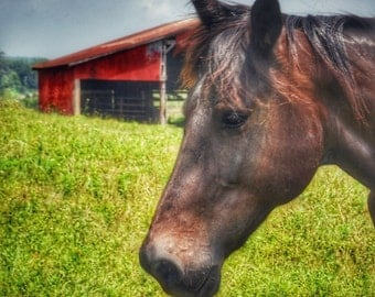 8x10 Brown Horse & Red Barn Photo Print