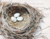 Nature Photography, Farmhouse Chic Bird Nest Decor, Neutral Wall Art Print, Rustic Home Decor, Pale Blue & Brown Nursery Art | 'Three Eggs'