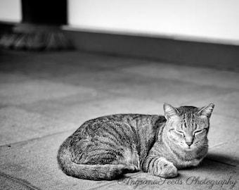 Cat photograph, black and white, feline, kitty, street photograph, meditation, animal photograph, stripes, Christmas, cat lover, SG50
