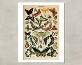 Papillion Pour Tous (Butterflies For All) Naturalist Print, 1907 - 8.5x11 Reproduction French Dictionary Color Plate