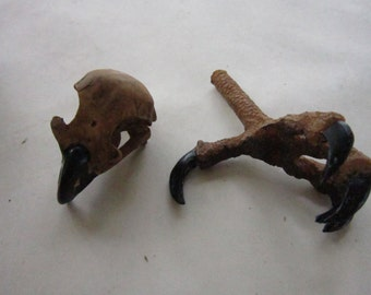 Red Tailed Hawk Skull & Talon Foot Set Resin Replica Tribal Craft Coyote Eagle