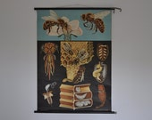 RESERVED Vintage Pull Down School Chart. Honey bee. Flower. Blue. Jung Koch Quentell. Germany. Classroom Wall Chart. 0983