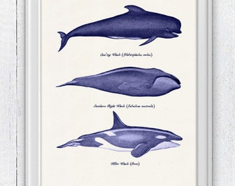 Whales and dolphins n1-  sea life print- Home wall art whales print SPA063