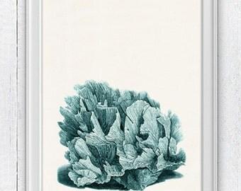 Sea foam coral n02 - sea life print- Antique sealife Illustration - Marine  sea life illustration A4 print SPC024